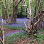 More ERDF-funded woodland management work completed