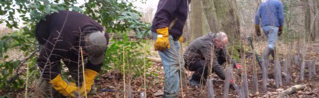 Arden Free Tree Scheme
