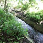 Hatchford Brook Olton Jubilee Park