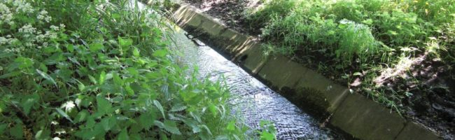 Hatchford Brook – Back to Nature